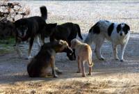 Νέα επίθεση αδέσποτων σκυλιών σε γυναίκα με το 5χρονο παιδί της στην Κοζάνη