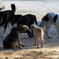 Περιστατικά δηλητηρίασης αδέσποτων ζώων στη Σιάτιστα – Τι λέει ο Δήμος Βοΐου