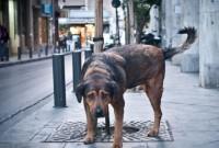 Τι ορίζει ο νόμος για τις υποχρεώσεις ιδιοκτητών δεσποζόμενων ζώων συντροφιάς