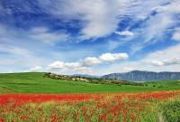 Η φωτογραφία της ημέρας: Ανοιξιάτικο τοπίο, λιβάδι με παπαρούνες στην Αιανή