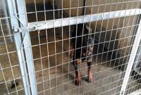 Βίντεο: Δείτε τα δυο αρσενικά ροτβάιλερ που τραυμάτισαν θανάσιμα τον 5χρονο στο κυνοκομείο της Κοζάνης