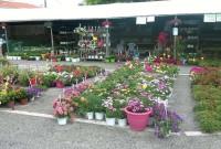 Ολοκληρώθηκε η 11η Ανθοκομική Έκθεση και Ειδών Κήπου 2016 στο Εκθεσιακό Κέντρο Κοζάνης