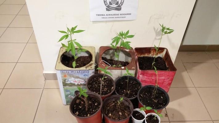 Συνελήφθη 49χρονος στα Πετρανά για καλλιέργεια κάνναβης – Κατασχέθηκαν 10 δενδρύλλια