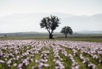 Ένα ταξίδι στον Κρόκο Κοζάνης: Η μοναδική εμπειρία και μια νέα beauty άφιξη