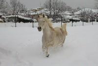 Η φωτογραφία της «λευκής» εβδομάδας, από το Μικρόβαλτο!