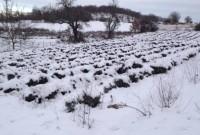 Ζημιές στο ζωικό και φυτικό κεφάλαιο λόγω παγετού στη Δυτική Μακεδονία
