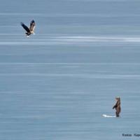 Εικόνες από το… National Geographic στην Καστοριά! Δείτε εξαιρετικές φωτογραφίες από την εμφάνιση της αρκούδας στην παγωμένη λίμνη