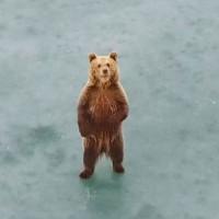 Οι βόλτες της αρκούδας στην παγωμένη λίμνη της Καστοριάς! Δείτε εντυπωσιακό βίντεο με drone