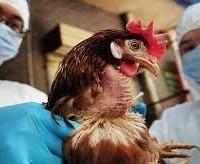 Η Κτηνιατρική Υπηρεσία της Περιφέρειας για την αύξηση των εστιών της νόσου της Γρίπης των πτηνών