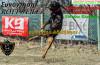 Μονοήμερο ενημερωτικό – εκπαιδευτικό σεμινάριο για τη φυλή Rottweiler από τον Κυναθλητικό Όμιλος White Ghosts