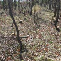 Βίντεο: Ασυνείδητοι έκοψαν 40-50 δέντρα βελανιδιάς από δασύλλιο στο 2ο χλμ Μικροβάλτου – Λιβαδερού!