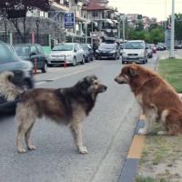Γέμισε αδέσποτα σκυλιά η πόλη της Καστοριάς – Δείτε το βίντεο του youtuber John Li