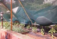 Φωτογραφίες: Αρκετές ζημιές σε καλλιέργειες από τη χαλαζόπτωση στην Κοζάνη – Πτώση δέντρου στον σταθμό των τρένων – 13 κλήσεις στην Πυροσβεστική