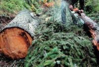 Νεκρός υλοτόμος σε δασική περιοχή της Καστοριάς – Τον καταπλάκωσε δέντρο που έκοψε