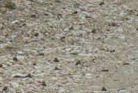 «Έβρεξε» βατράχια στο Ρύμνιο Κοζάνης! Δείτε το βίντεο
