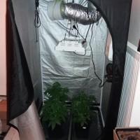 20χρονος στη Φλώρινα καλλιεργούσε κάνναβη σε αυτοσχέδια εγκατάσταση υδροπονικής καλλιέργειας στο σπίτι του