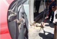 Γέμισε με φίδια η Λάρισα – Τα ερπετά εμφανίστηκαν ακόμα και στο κέντρο της πόλης σπέρνοντας τον πανικό – Ποιος ο λόγος