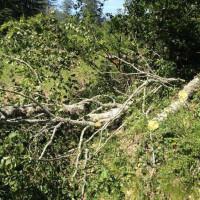 Συνεχίζεται η παράνομη υλοτομία στον Γράμμο – Άλλη μία σύλληψη Αλβανού σε δασική περιοχή