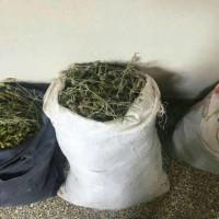 Δυτική Μακεδονία: Και μετά την λαθραία υλοτομία, στο στόχαστρο τα αρωματικά φυτά! 2 συλλήψεις Αλβανών με 25 κιλά τσάι του βουνού