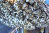 Νεκρός 63χρονος από τσιμπήματα μελισσών στα Γρεβενά – Άλλοι 2 άντρες στο Νοσοκομείο της πόλης