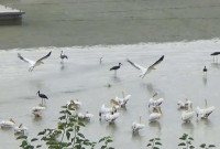 Πολλά είδη μεταναστευτικών πτηνών στη λίμνη Πολυφύτου – Δείτε το βίντεο