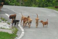Ανακοίνωση του Δήμος Σερβίων – Βελβεντού για τα αδέσποτα ζώα