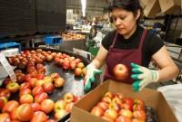 Μείωση της παραγωγής μήλων στην Ελλάδα – Σχεδόν ολική καταστροφή στην Καστοριά