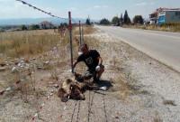 Ένα ακόμη θανατηφόρο τροχαίο ατύχημα με θύμα αρκούδα σε περιοχή της Καστοριάς
