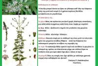 Η καλλιέργεια και οι ιατροφαρμακευτικές ιδιότητες της λουίζας – Του Σταύρου Π. Καπλάνογλου, Γεωπόνου