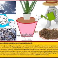 Αλόη η γνήσια – Καλλιέργεια και ιατροφαρμακευτικές ιδιότητες – Του γεωπόνου Σταύρου Π. Καπλάνογλου
