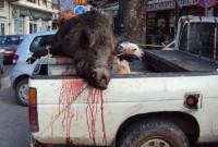 Απάντηση της Οικολογικής Κίνησης Κοζάνης στον Κυνηγετικό Σύλλογο Κοζάνης: «Δεν μιλάνε για σκοινί στο σπίτι του κρεμασμένου»