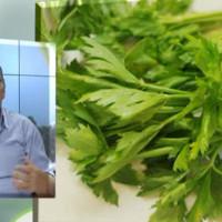 Σέλινο: Καλλιέργεια και ιατροφαρμακευτικές ιδιότητες – Του Σταύρου Καπλάνογλου, Γεωπόνου