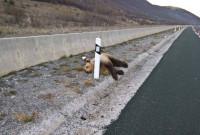 Τροχαίο ατύχημα με αρκούδα στην Εγνατία Οδό έξω από την Κοζάνη – Δείτε φωτογραφία