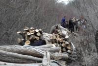 Σύλληψη δύο αλλοδαπών σε δασική περιοχή της Καστοριάς για παράνομη υλοτομία