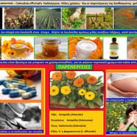 Πληροφορίες για την καλλιέργεια και τις ιδιότητες της καλέντουλας – Του Σταύρου Καπλάνογλου Γεωπόνου