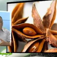 Βίντεο: Χρήσιμες πληροφορίες για τον γλυκάνισο – Του Σταύρου Π. Καπλάνογλου Γεωπόνου