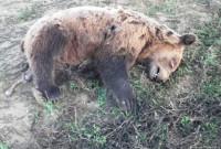 Κλειδί Αμυνταίου: Άλλο ένα νεκρό αρκουδάκι από τροχαίο ατύχημα στη Δυτική Μακεδονία