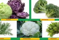 Τι ποικιλίες φρούτων και λαχανικών να φυτεύσετε στον κήπο σας – Της Γεωπόνου Μάρθας Καπλάνογλου