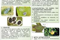 Ανακοίνωση της Διεύθυνσης Αγροτικής Οικονομίας και Κτηνιατρικής Κοζάνη για τον μαύρο αλευρώδη των εσπεριδοειδών Aleyrocanthus spiniferus