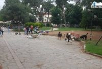 Αγέλες αδέσποτων σκυλιών στην Πτολεμαΐδα και μετά από την επίθεση στον 10χρονο – Δείτε βίντεο και φωτογραφίες