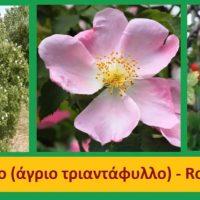Υπερτροφές: Φρούτα του δάσους – Της γεωπόνου Μάρθας Στ. Καπλάνογλου