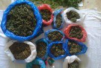 5 συλλήψεις σε Γρεβενά και Κοζάνη για πώληση, καλλιέργεια και κατοχή ναρκωτικών – Δείτε φωτογραφίες