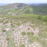 Αναδάσωση από τον ΤΑΡ στη Βόρεια Ελλάδα, με 400.000 δένδρα και θάμνους – Πλήρης αντικατάσταση και αποκατάσταση της δασικής έκτασης που χρησιμοποιήθηκε
