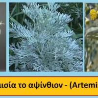 Αρωματικά και φαρμακευτικά φυτά σε γλάστρα – Της Μάρθας Στ. Καπλάνογλου, Τεχνολόγου Γεωπόνου