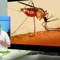 Ο βιολογικός κύκλος των κουνουπιών και η οικολογική αντιμετώπιση – Του Σταύρου Π. Καπλάνογλου