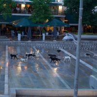 Η αγέλη των αδέσποτων σκυλιών της κεντρικής πλατείας Κοζάνης – Δείτε φωτογραφίες