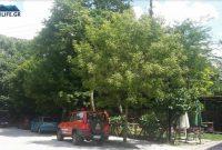 Κοζάνη: Παραλίγο πυρκαγιά από σπινθηρισμό καλωδίων της ΔΕΗ σε κλαδιά δέντρου στην οδό Βελβεντού – Δείτε φωτογραφίες
