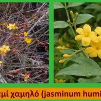 Φυτά για αναρρίχηση και πέργολα – Της Τεχνολόγου Γεωπόνου Μάρθας Καπλάνογλου
