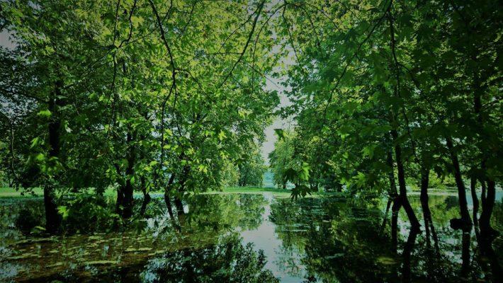 Η φύση στα καλύτερά της: Πανέμορφες εικόνες από το πλημμυρισμένο πλατανόδασος της λίμνης Πολυφύτου