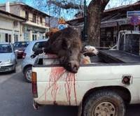 Το παράνομο κυνήγι, οι αγριότητες των λαθροκυνηγών και η Περιφέρεια
